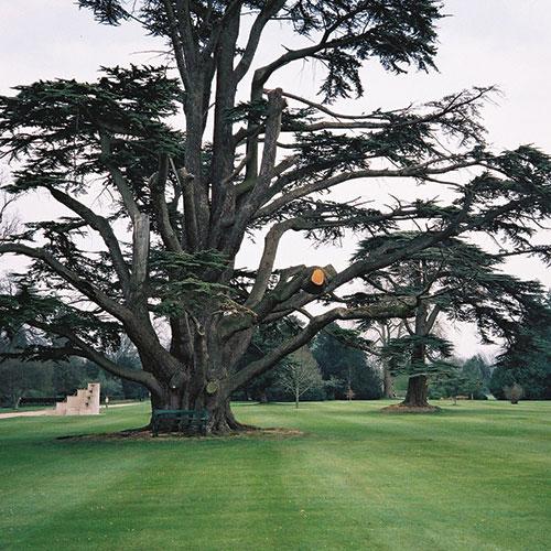 cedars-featured